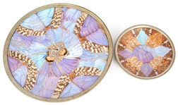 IRIDESCENT BUTTERFLY WING PLATES LOT OF TWO